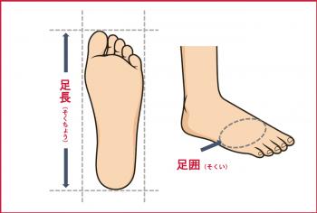 足長と足囲の説明